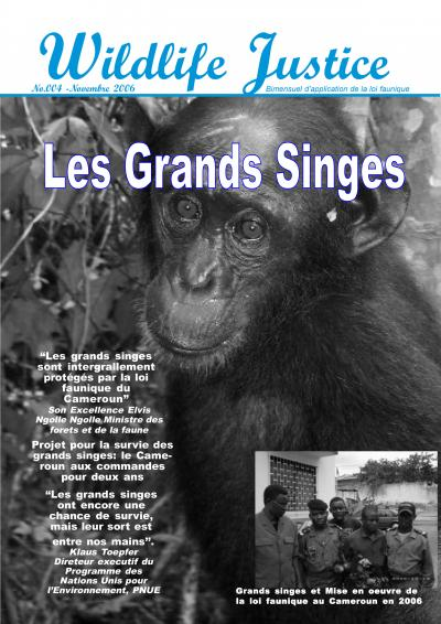 4 - Les grands singes