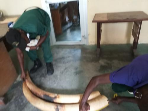 3 people arrested for ivory trafficking