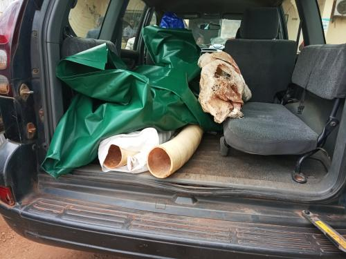 5 men including the son of a former minister have been arrested with two huge ivory tusks in Yaounde